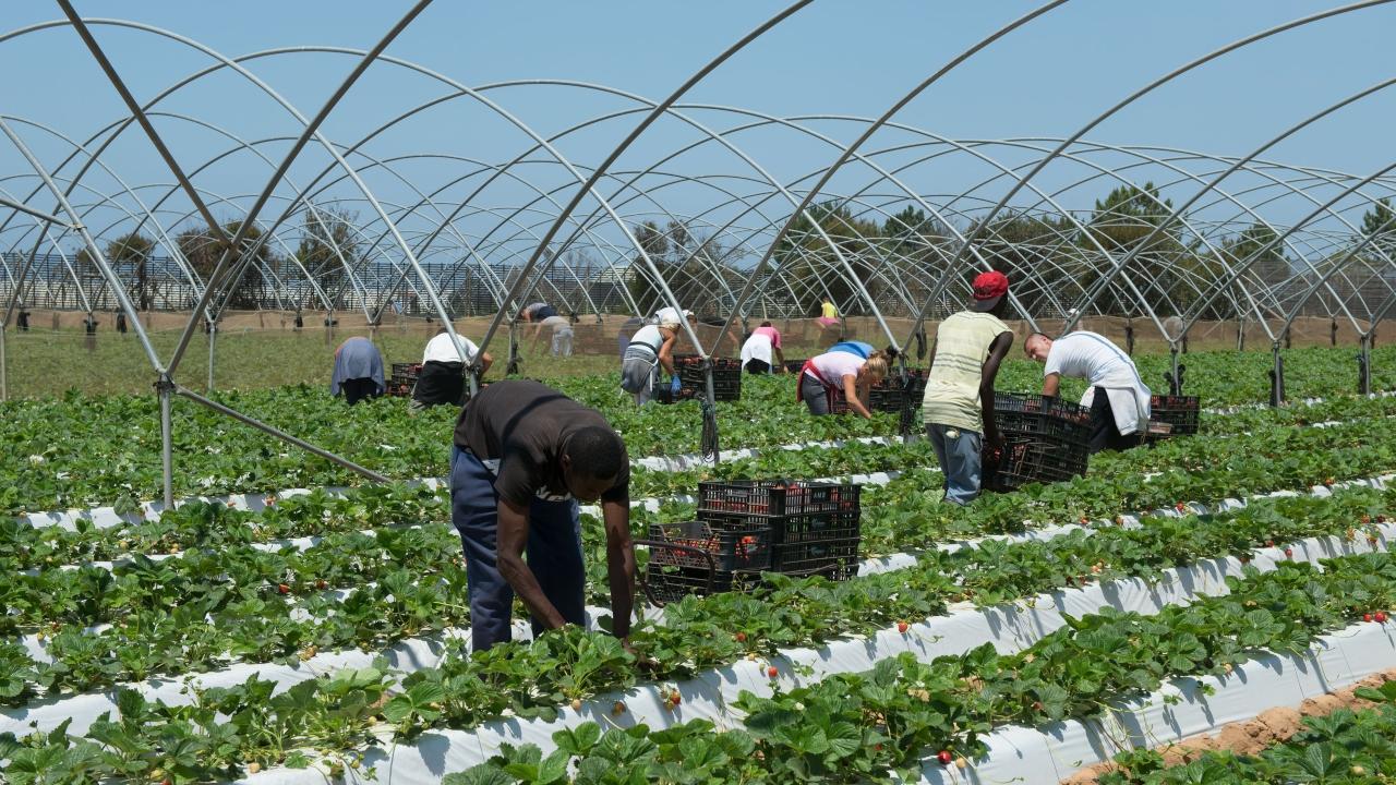 Resoluções sobre condições dos imigrantes no Perímetro do Mira aprovadas