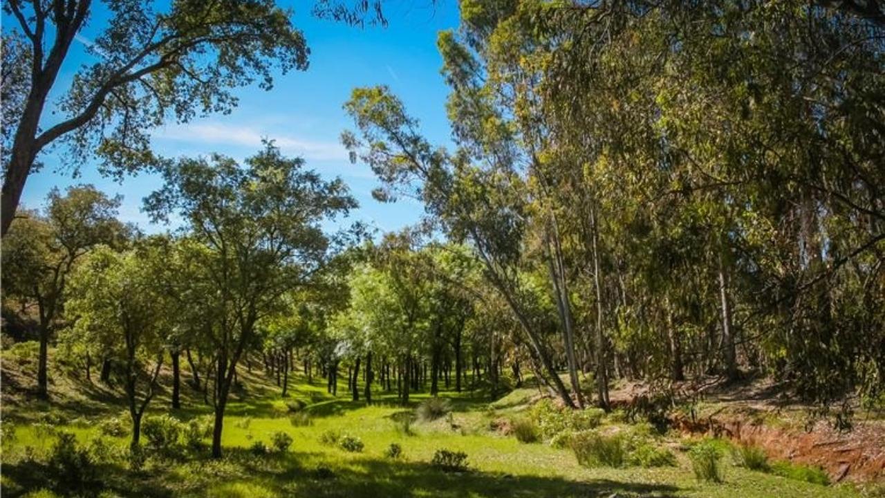 Candidatura de Beja ao Fundo Florestal Permanente aprovada