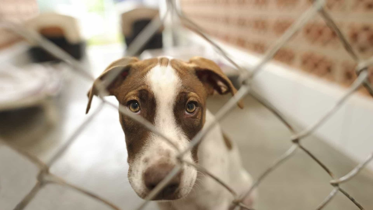 Rede de centros de recolha de animais avança no Alentejo