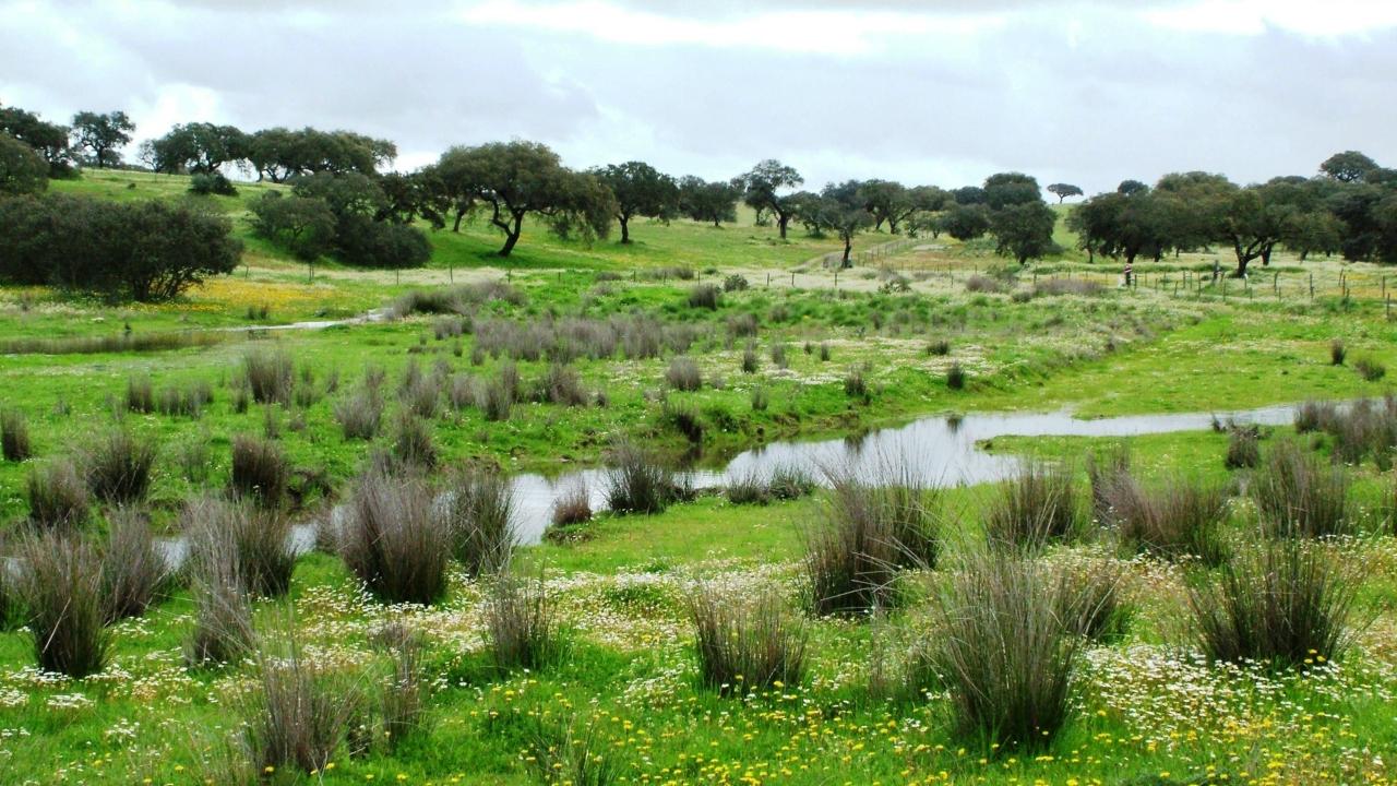 ICNF aprova Gabinete Técnico Florestal de Aljustrel