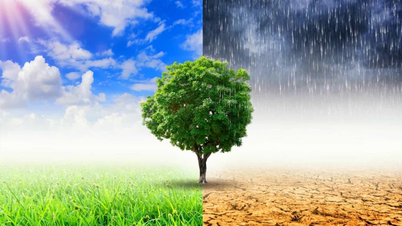 Almodôvar lança projeto para combater alterações climáticas