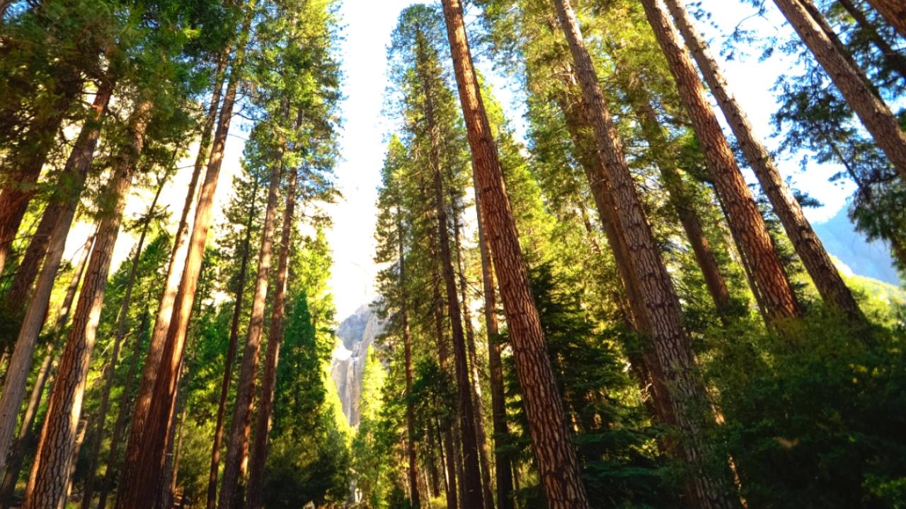 Beja promove voluntariado jovem para as florestas